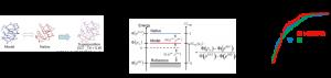 タンパク質立体構造予測における天然らしさの評価